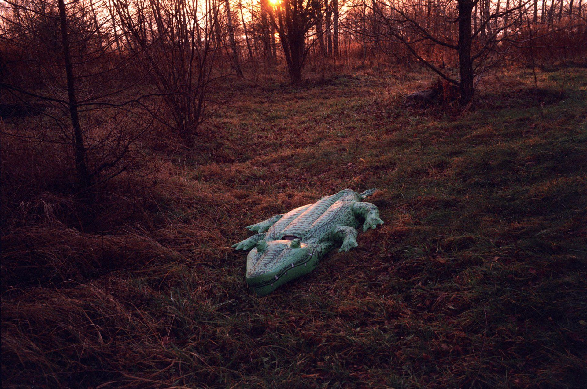 Dmuchany krokodyl wlasku natle zachodzącego słońca.