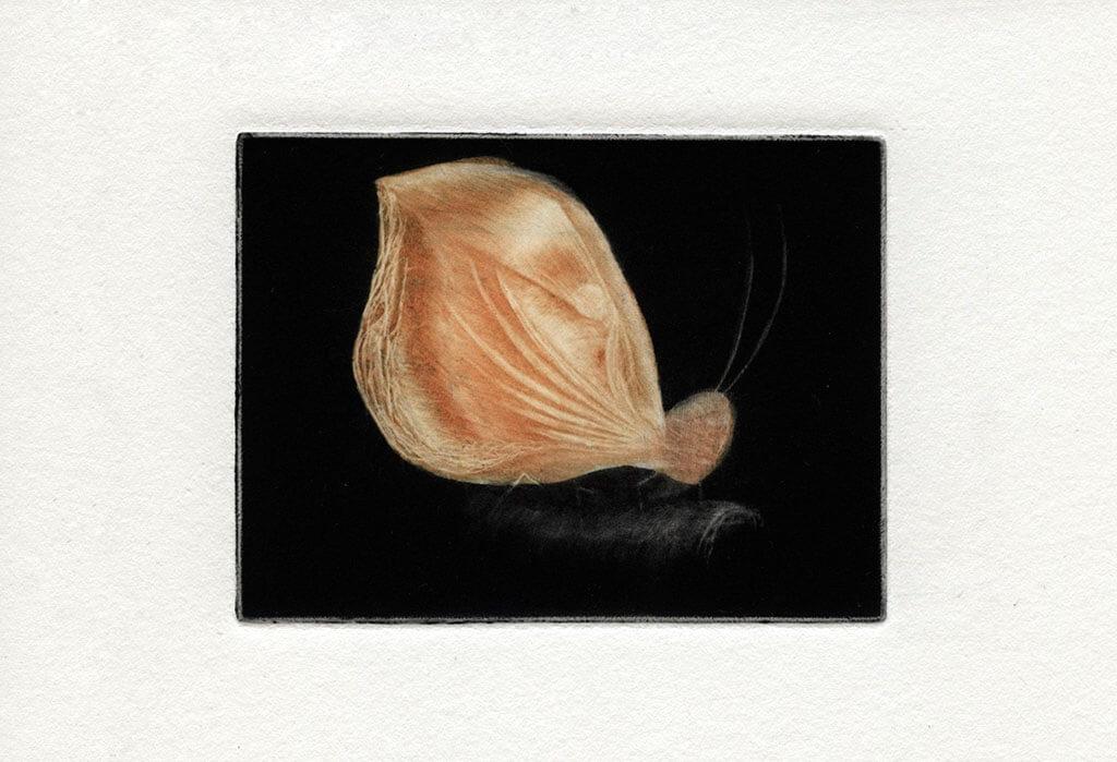 Praca wykonana nawarsztatach mezzotinty zMajlą Zeneli.