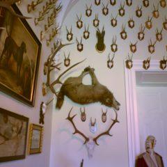 Ściana z porożami i obrazami myśliwskimi.