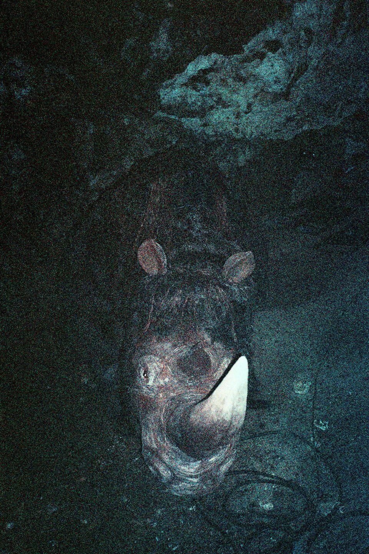 Nocne zdjęcie nosorożca.