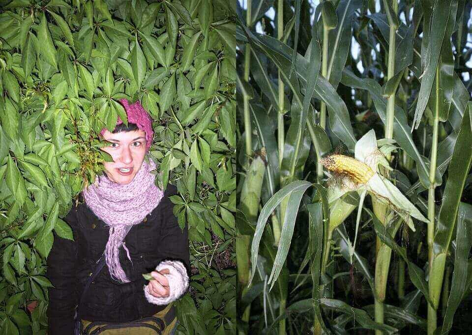 Dwa zdjęcia - zpostacią wśród liści ikolbą kukurydzy.